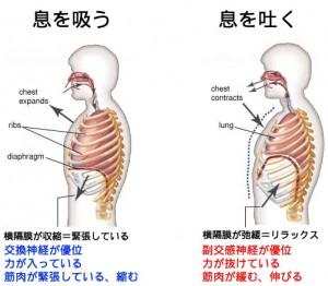 横隔膜機能 (2)